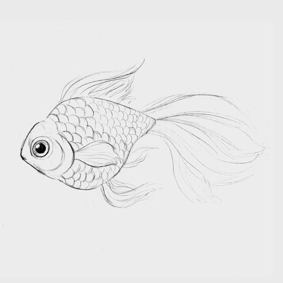 Goldfish [Sketch] By Julia Vysotskaya (hochulia) From The Series Sherwynu0026#39;s Forest On NeonMob